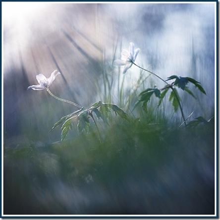 marta-cernicka